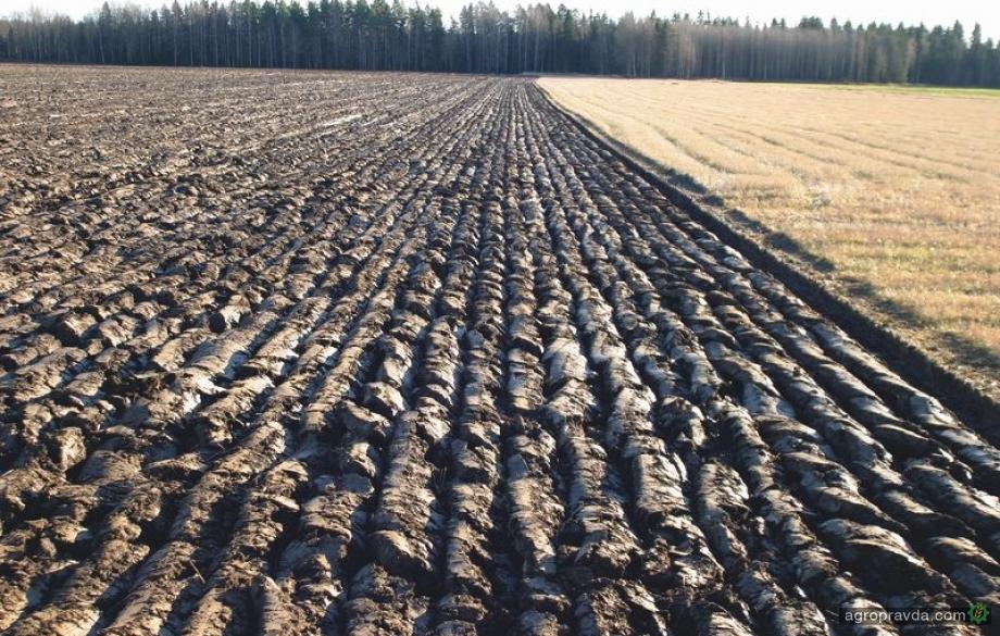 Сколько будет стоить земля после запуска рынка